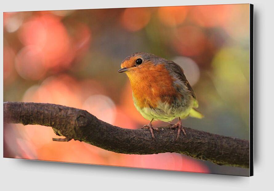 Bird on branch from Pierre Gaultier Zoom Alu Dibond Image