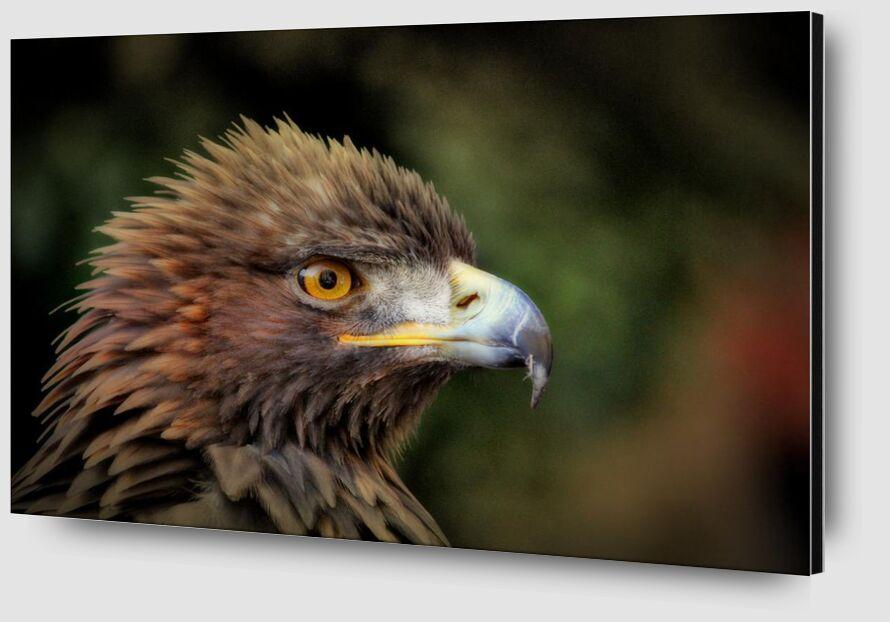 Royal Bird from Pierre Gaultier Zoom Alu Dibond Image