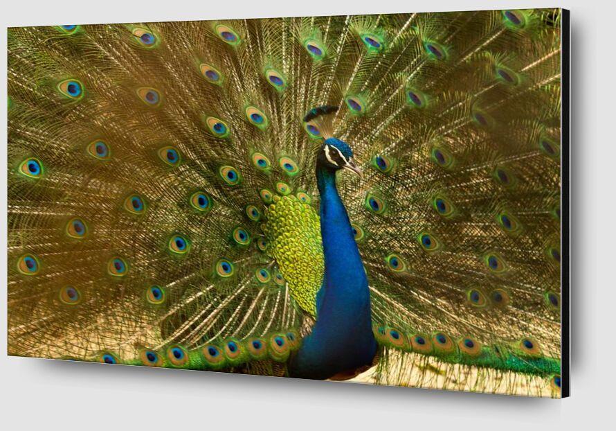 Les ailes du pan de Pierre Gaultier Zoom Alu Dibond Image