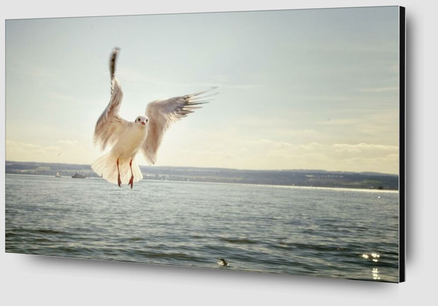 The approach of the seagull from Pierre Gaultier Zoom Alu Dibond Image