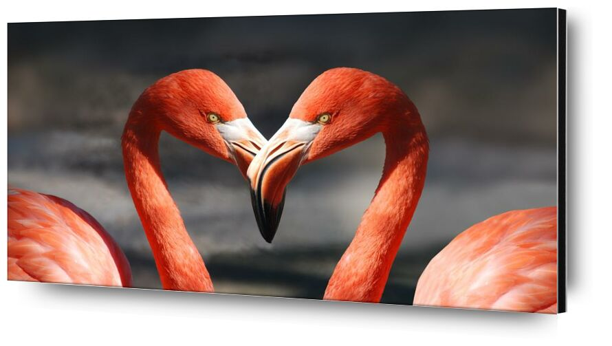 Couple of flamingo from Pierre Gaultier, Prodi Art, animals, birds, feathers, flamingo, flamingos, plumage