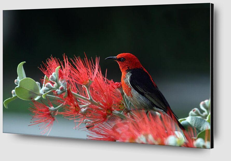 Oiseau sur plante de Pierre Gaultier Zoom Alu Dibond Image
