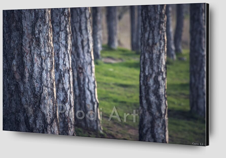 Trees de Caro Li Zoom Alu Dibond Image