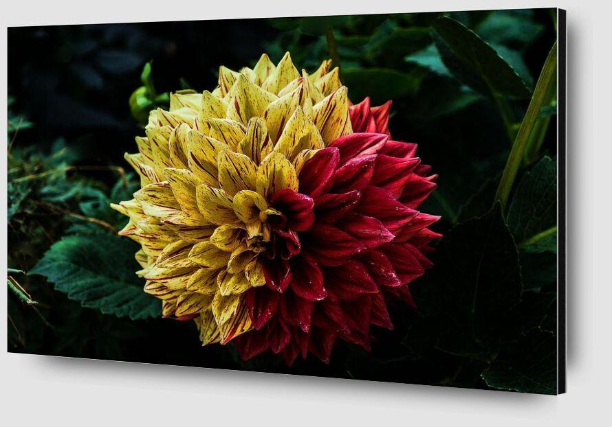 Fleur des îles de Pierre Gaultier Zoom Alu Dibond Image
