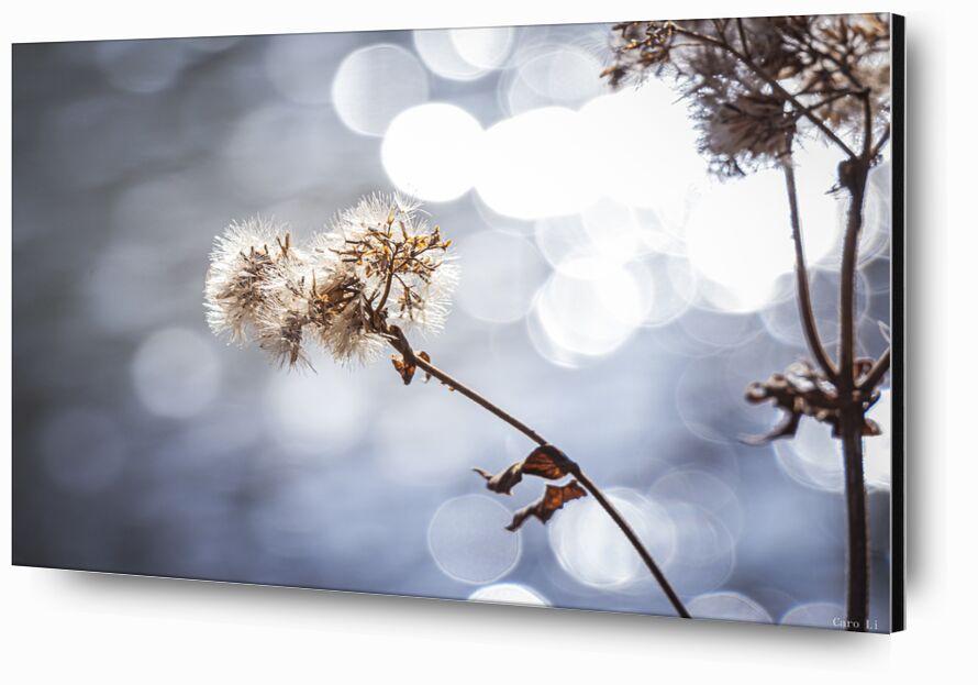 Flower de Caro Li, Prodi Art, Landsacpe, paysage, nature, fleur, fleur