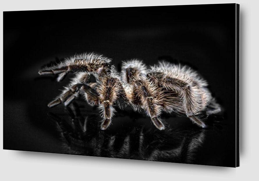 The spider from Pierre Gaultier Zoom Alu Dibond Image