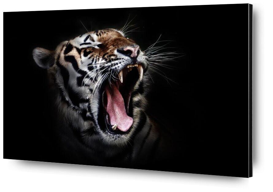 Férocité from Aliss ART, Prodi Art, animal, animal photography, big cat, close-up, tiger, wildlife, wild cat