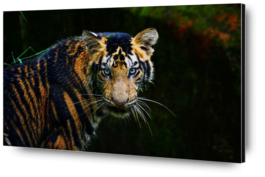 Radiation from Aliss ART, Prodi Art, animal, big cat, carnivore, dangerous, mammal, predator, safari, tiger, wild animal, wild cat, wildlife, zoo, endangered