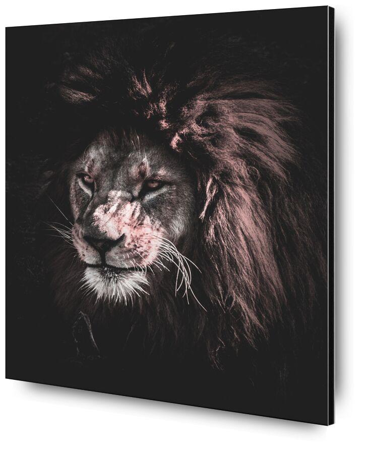 Roi de la nature from Aliss ART, Prodi Art, animal, animal photography, big, big cat, carnivore, close-up, danger, dangerous, eyes, felidae, feline, fur, head, hunter, Lion, mammal, outdoors, predator, rocks, staring, whiskers, wild, wild animal, wildlife, zoo, king of the jungle, mouth, stare