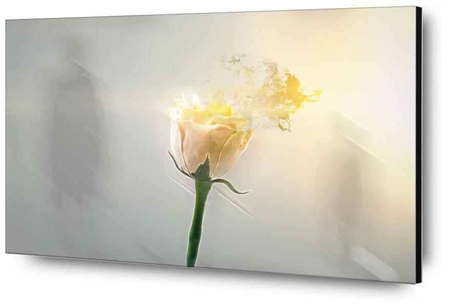 Au fil du vent de Adam da Silva, Prodi Art, ombre, rose, soleil, vert, jaune, fleur