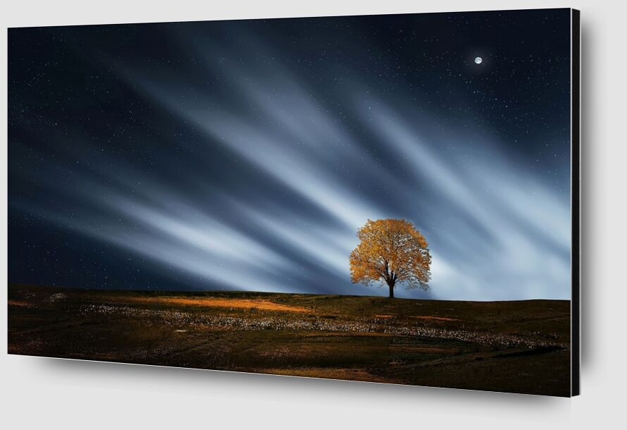The night tree from Pierre Gaultier Zoom Alu Dibond Image