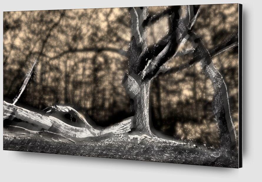 L'ombre du tronc de Adam da Silva Zoom Alu Dibond Image