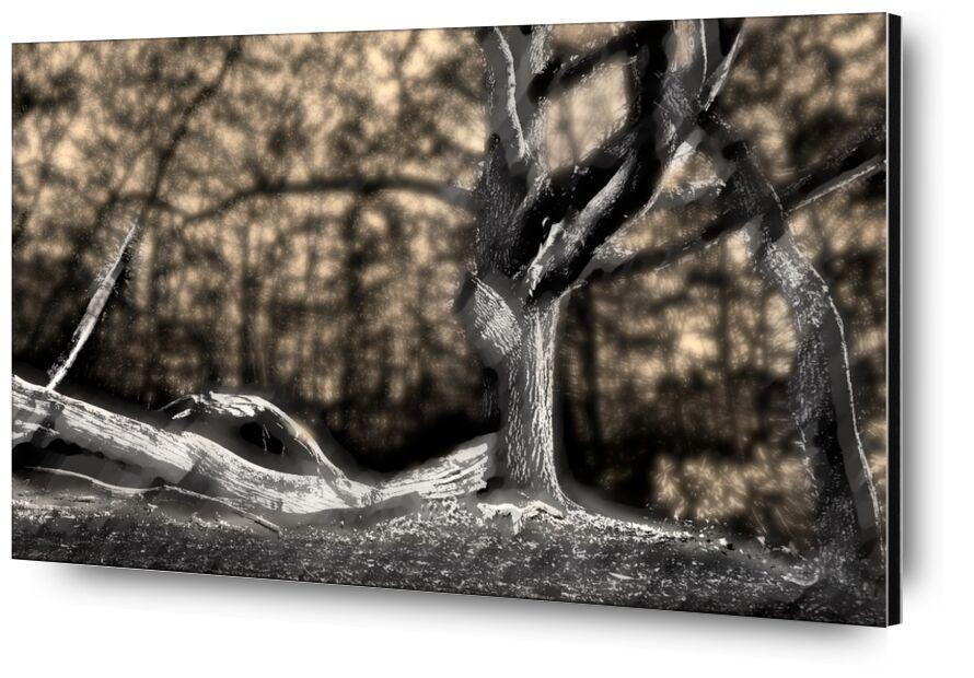 The shadow of the trunk from Adam da Silva, Prodi Art, black White, winter, branch, forest, black, tree, shadow, dark