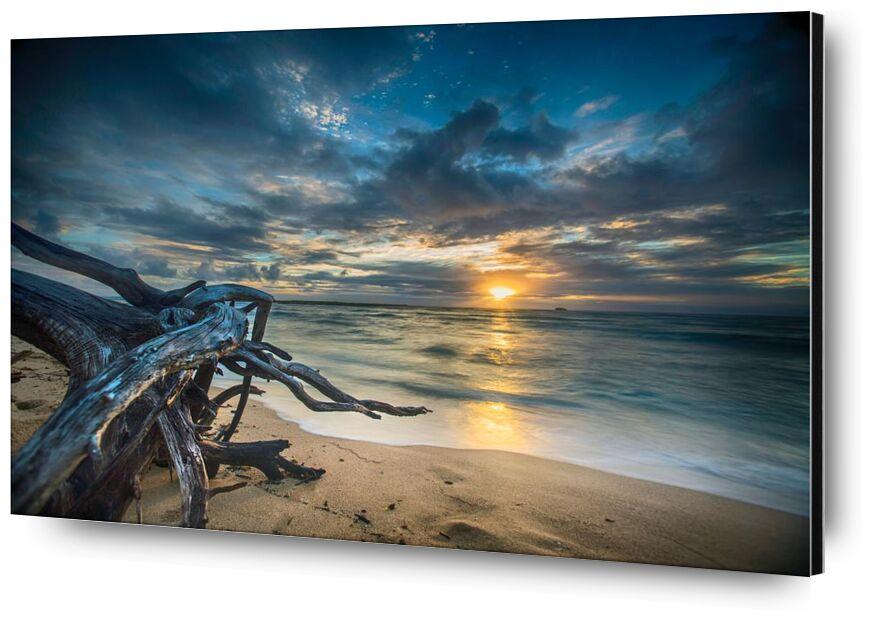 Le coucher de soleil from Aliss ART, Prodi Art, tree trunk, water, sunset, sunrise, seascape, sea, dusk, dawn, beach, sky, seashore