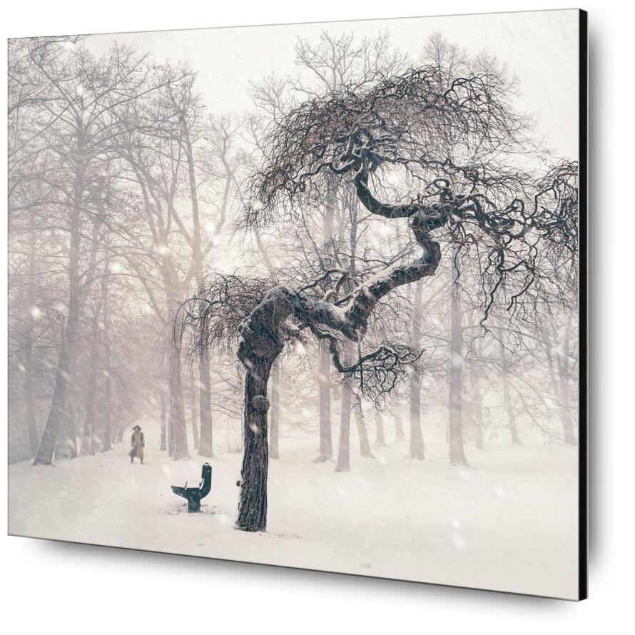 مقاومة from Aliss ART, Prodi Art, woods, snowstorm, dark, branches, bench, winter, weather, trees, snowy, snow, person, nature, fog, landscape, icy, frozen, frosty, freezing, forest, foggy, cold