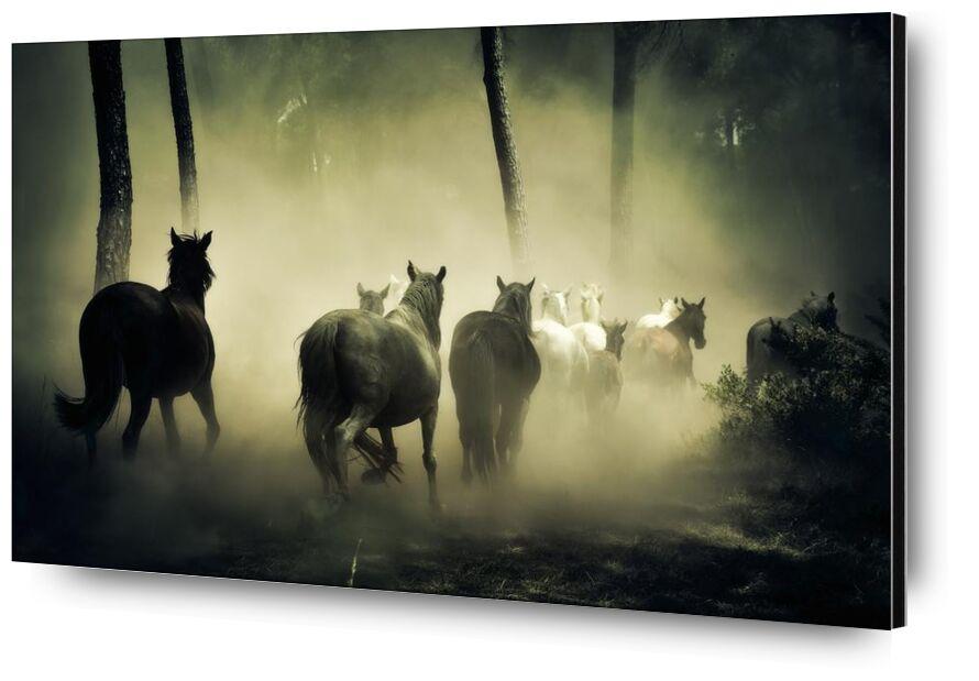 Liberté from Aliss ART, Prodi Art, woods, wildlife, outdoors, sea, cattle, horses, forest, fog, animals