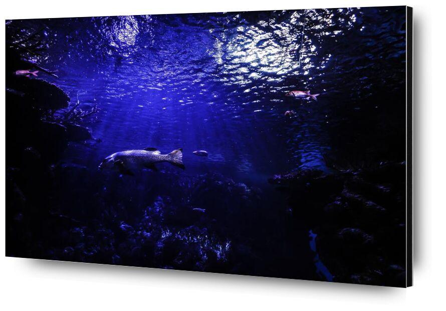 العالم الازرق from Aliss ART, Prodi Art, aquarium, water, underwater, sea, pond, ocean, lake, fish, deep, dark, animal