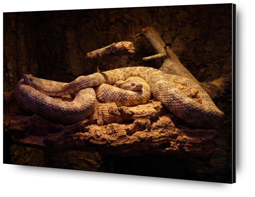 تناسق from Aliss ART, Prodi Art, animal, green, green mamba, lizard, mamba, nature, pattern, poison, reptile, snake, poisonous