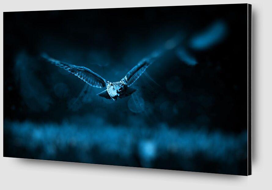 Owl from Aliss ART Zoom Alu Dibond Image