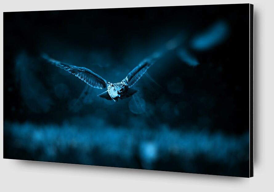 Owl from Aliss ART Zoom Alu Dibond Image