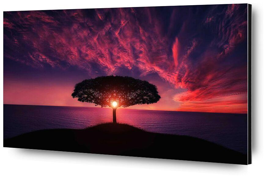 Le coeur from Aliss ART, Prodi Art, tree, sunset, sunrise, Sun, sky, romantic, ocean, nature, landscape