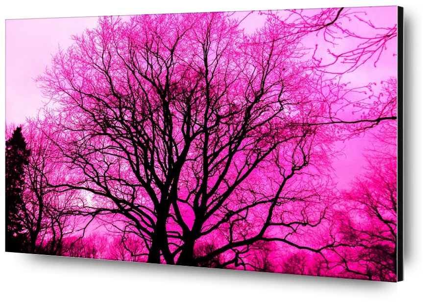 Life in pink from Aliss ART, Prodi Art, wallpaper, lone, wood, winter, purple, tree, Sun, silhouette, scenic, outdoors, nature, landscape, fog, fall, environment, dawn, dark, color, bright, branch, black, art, abstract