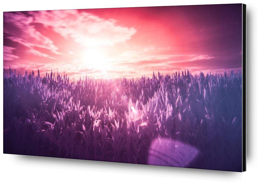 Rêve from Aliss ART, Prodi Art, dream, lilac, meadow, pink, purple, red, Sun, filter, infrared, sunbeams, surreal