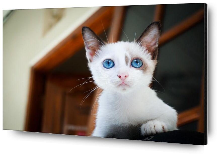 هر from Aliss ART, Prodi Art, animal, animal photography, blue eyes, blur, Cat, close-up, cute, eyes, feline, focus, fur, little, looking, mammal, pet, white, young, adorable, blurry, domestic cat, felidae, kitten, kitty, snout, whiskers