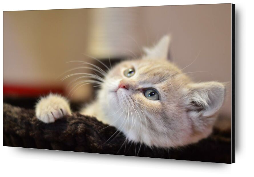Pause photo from Aliss ART, Prodi Art, adorable, animal, Cat, close-up, cute, feline, kitty, pet, whiskers, downy