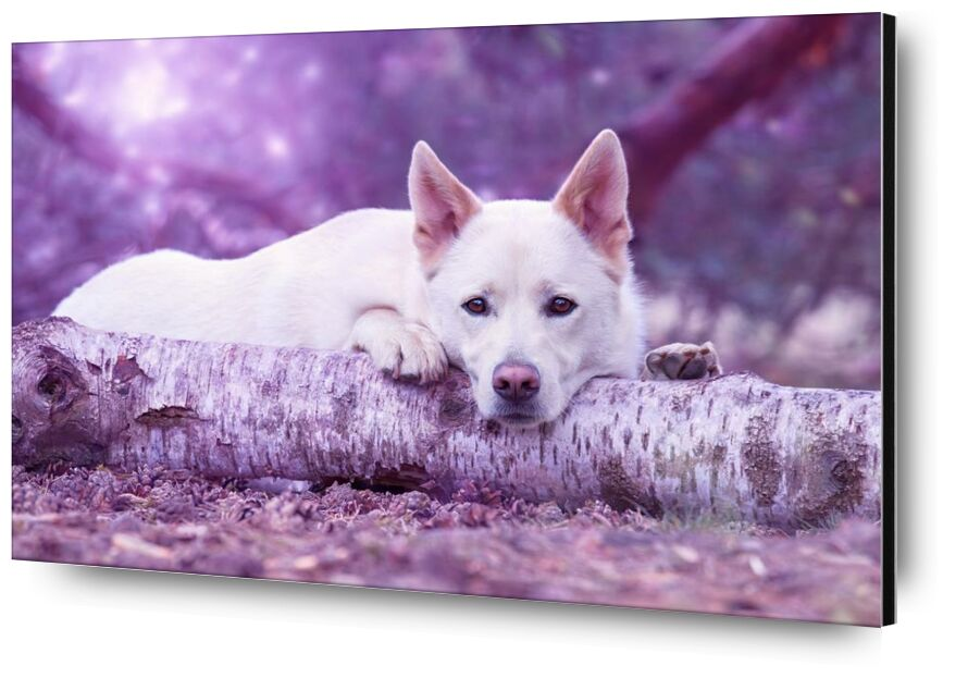 À l'écoute from Aliss ART, Prodi Art, animal photography, animal portrait, blur, canine, cute, dog, fur, looking, mammal, pet, portrait, adorable  animal, breed, domestic, trunk