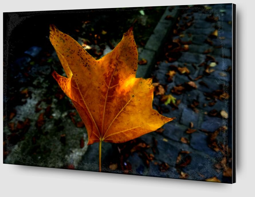 Feuille from JuJuPhotographies Zoom Alu Dibond Image