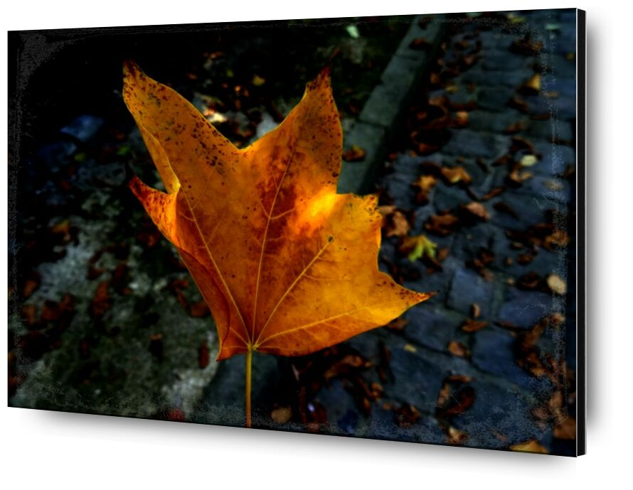 Feuille from JuJuPhotographies, Prodi Art, nature, tree, autumn, leaves