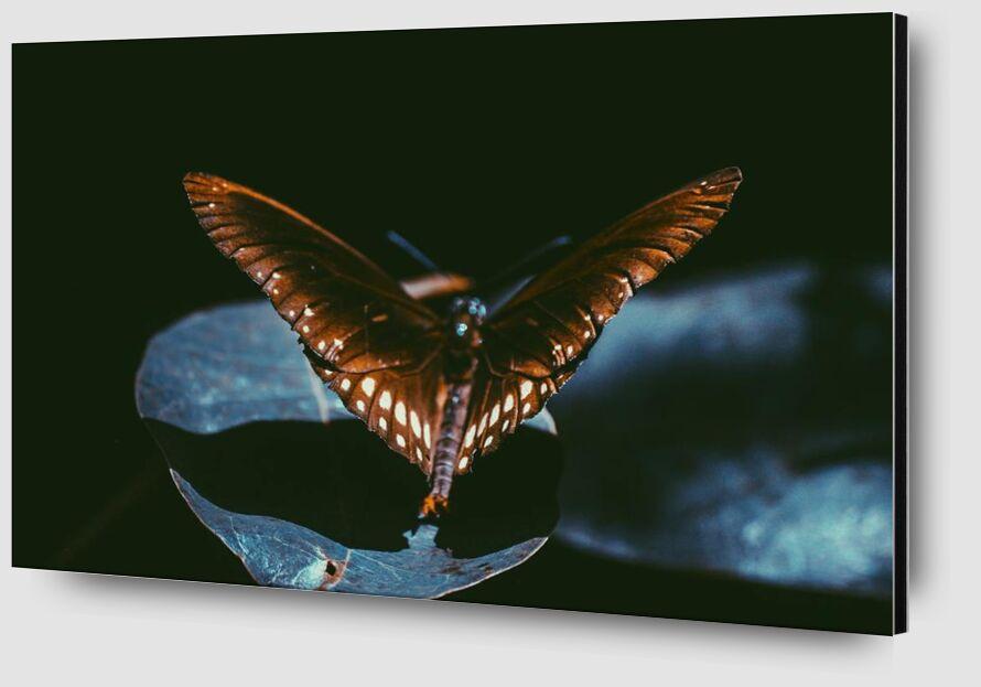 Sombre from Aliss ART Zoom Alu Dibond Image