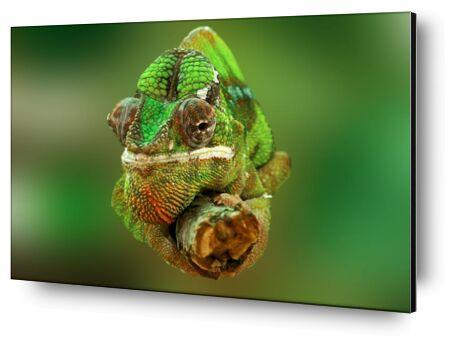 Chameleon from Pierre Gaultier, Prodi Art, Art photography, Aluminum mounting, Prodi Art