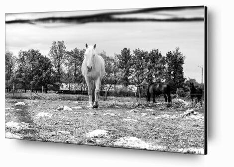 Le cheval de Caro Li, Prodi Art, Photographie d'art, Contrecollage aluminium, Prodi Art