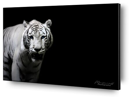 Le Tigre de Sibérie sorti des... de Mayanoff Photography, Prodi Art, Photographie d'art, Contrecollage aluminium, Prodi Art