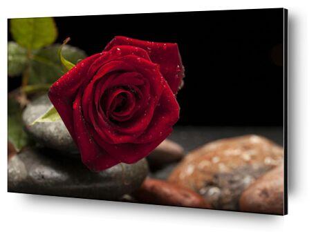 The Red Rose from Pierre Gaultier, Prodi Art, Art photography, Aluminum mounting, Prodi Art