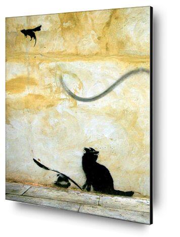 Cat - BANKSY from AUX BEAUX-ARTS, Prodi Art, Art photography, Mounting on aluminium, Prodi Art