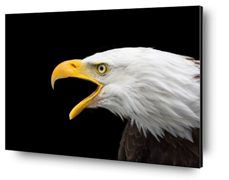 Beak of the Eagle from Pierre Gaultier, Prodi Art, Art photography, Aluminum mounting, Prodi Art