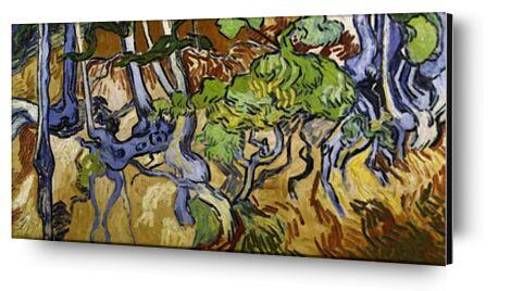 Tree Roots and Tree Trunks - V... from AUX BEAUX-ARTS, Prodi Art, Art photography, Mounting on aluminium, Prodi Art