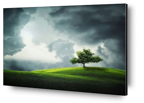 The tree from Pierre Gaultier, Prodi Art, Art photography, Aluminum mounting, Prodi Art
