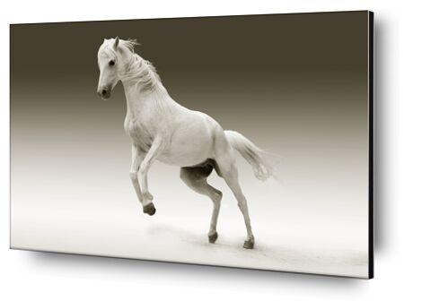 Horse from Pierre Gaultier, Prodi Art, Art photography, Aluminum mounting, Prodi Art
