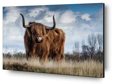 The buffalo meadow from Pierre Gaultier, VisionArt, Art photography, Aluminum mounting, Prodi Art