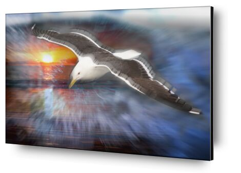 Flight of a seagull from Adam da Silva, Prodi Art, Art photography, Aluminum mounting, Prodi Art