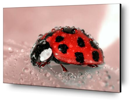 Red Ladybird from Pierre Gaultier, VisionArt, Art photography, Aluminum mounting, Prodi Art