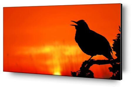 The silhouette of the bird from Pierre Gaultier, Prodi Art, Art photography, Aluminum mounting, Prodi Art