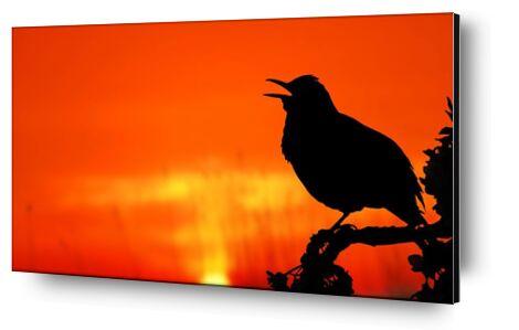 The silhouette of the bird from Pierre Gaultier, Prodi Art, Art photography, Mounting on aluminium, Prodi Art