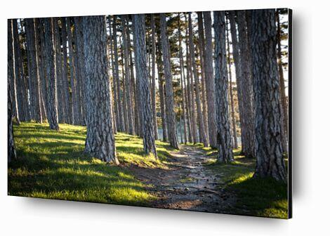 Le chemin de Caro Li, Prodi Art, Photographie d'art, Contrecollage aluminium, Prodi Art