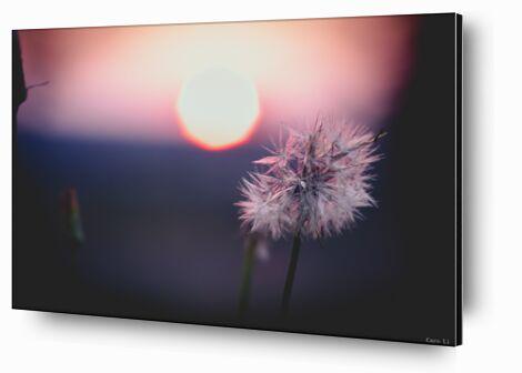 La fleur de Caro Li, Prodi Art, Photographie d'art, Contrecollage aluminium, Prodi Art