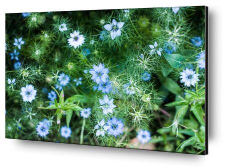 Blue flowers from Marie Guibouin, VisionArt, Art photography, Aluminum mounting, Prodi Art